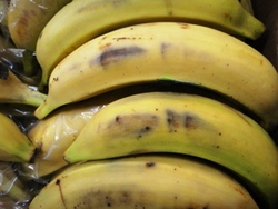 Platano Maduro fruta entera Plantain Whole Fruit